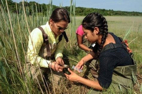 Rosmery Moran and Dr. Grella conduct a sediment sample at the Flax Pond Salt March in Old Field, N.Y.