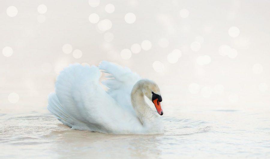 Sophia Seda's Swan Song